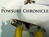 """The Powsurf Chronicles"" TEASER"