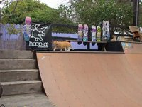 hoopla & friends mini ramp session