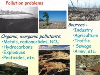 Bioremediation of Contaminated Elements - Elizabeth A.H. Pilon-Smits, Colorado State University