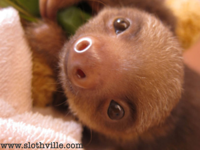 Cute Smiling Sloths