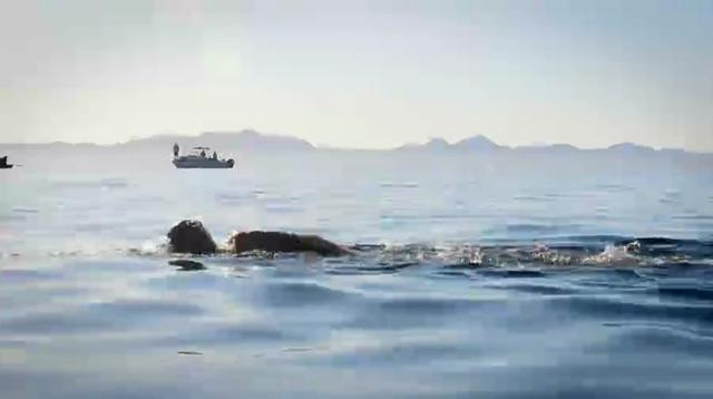 1er Cruce a Nado | Picazón - Isla Coronado - Loreto, Baja California Sur