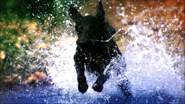 """Dog Whisperer """"Journey"""" :30 Spot - Nat Geo"""