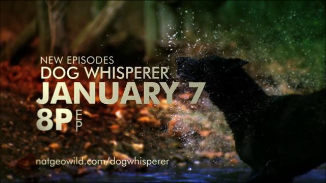 """Dog Whisperer """"Journey"""" :60 ALT Spot - Nat Geo"""