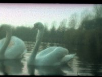 Swan Lake (00:32)