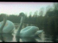 Swan Lake (00:32)