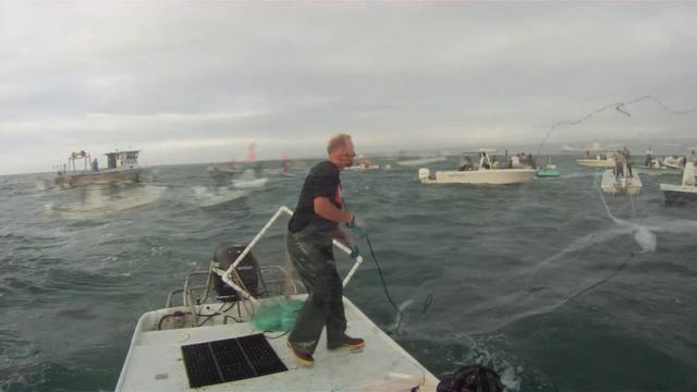 12  2011 Mullet Fishing On Vimeo