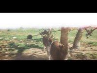 Donkeys (00:24)