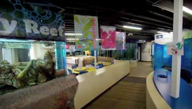 Santa Monica Pier Aquarium Video Tour On Vimeo