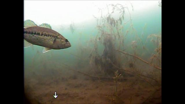 Ice fishing underwater camera footage january 7th 2012 for Underwater ice fishing camera