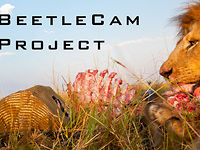 BeetleCam is Back Teaser