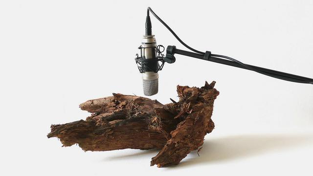"""25 woodworms, wood, microphone, sound system"" (2009) by Zimoun"
