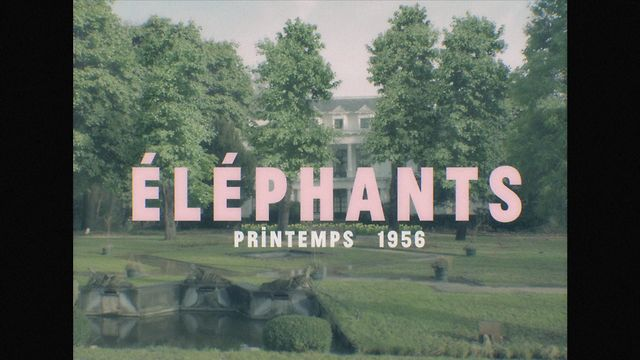 Blaudzun - Elephants