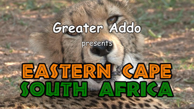 South Africa, Eastern Cape by Greater Addo