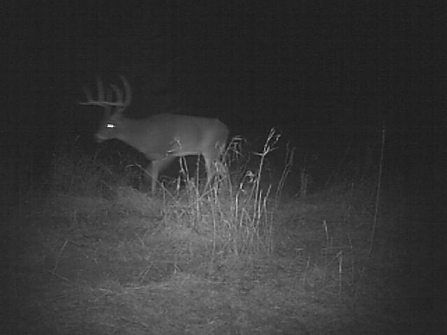 Trail Cam Pics Of Deer http://vimeo.com/35658696