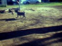 Dogpark - Lomokino Experiment #1 (00:40)