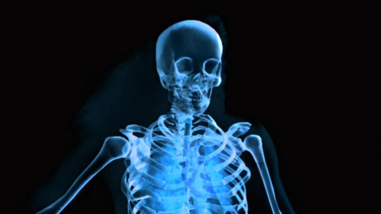 Human Body Plan