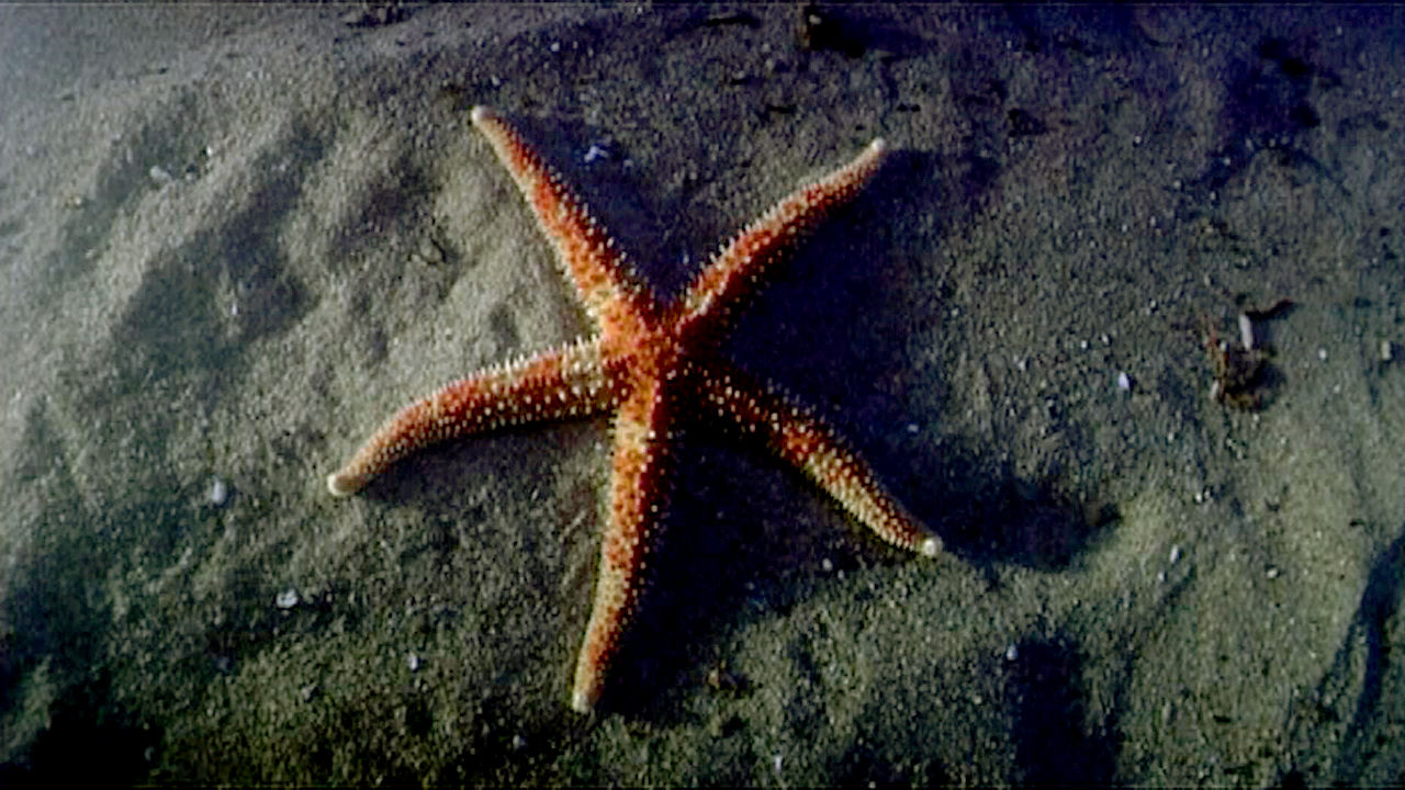 Echinoderms: The Ultimate Animal