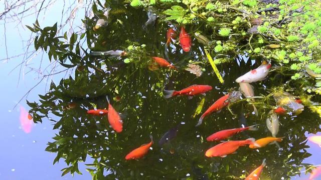 Mi estanque de peces on vimeo - Estanques para peces ...