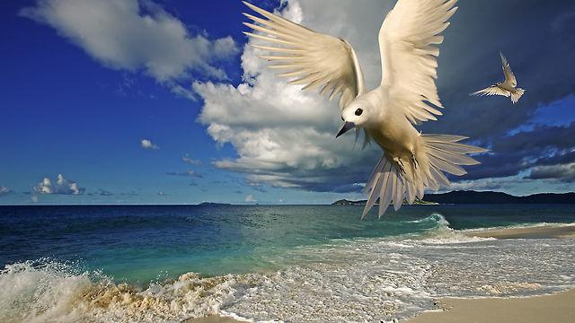 Cousine Island Seychelles - Paradise Regained