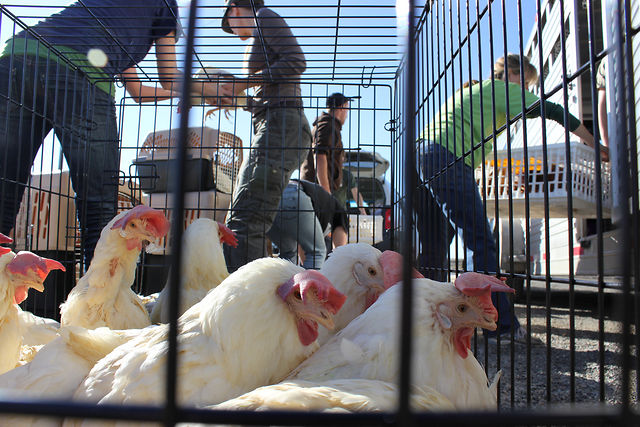 Second Largest Farm Animal Rescue in US History