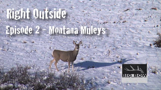 Episode 2 - Montana Mule Deer
