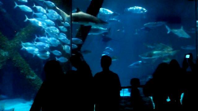 Audubon Aquarium Of The Americas On Vimeo