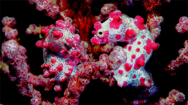 Wakatobi Underwater in HD