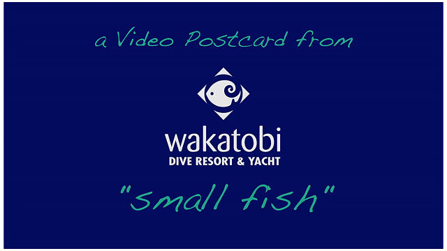A Video Postcard From Wakatobi Dive Resort: Small fish