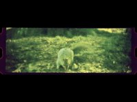 lomokino video - Harmony & Squirrel (00:36)