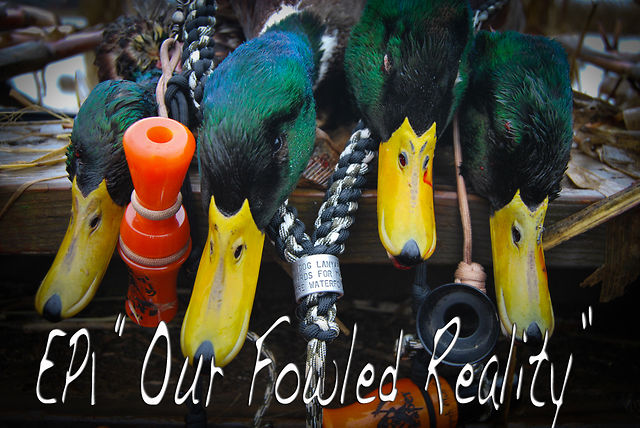 Episode 1 - Our Fowled Reality