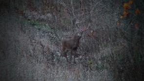 Tips on Bowhunting Whitetail
