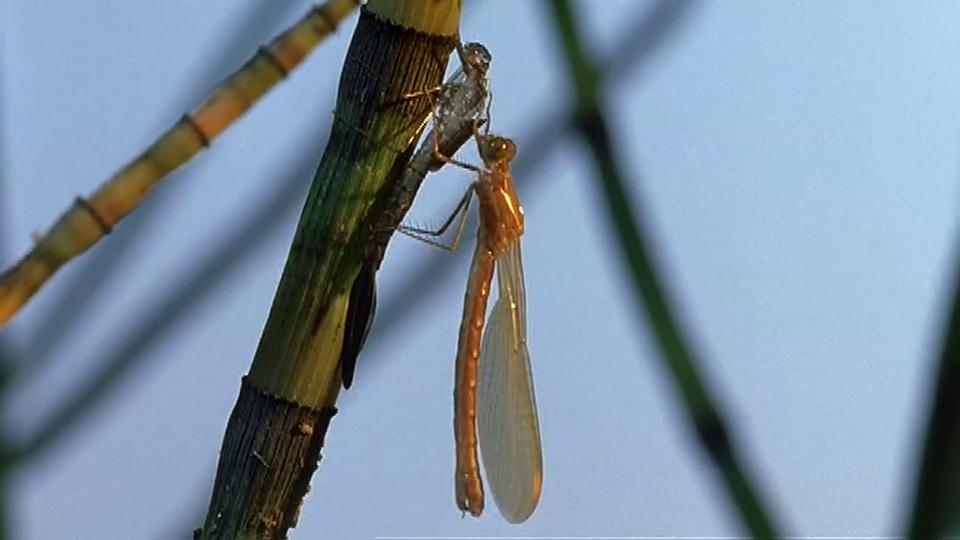 Arthropods: Dragonfly Metamorphosis