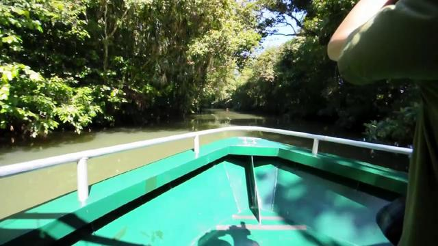 Palau jungle river boat cruise 20111104 on vimeo