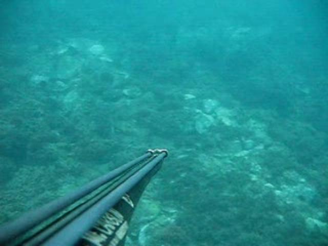 Video Pesca Sub apnea cefalo all'aspetto