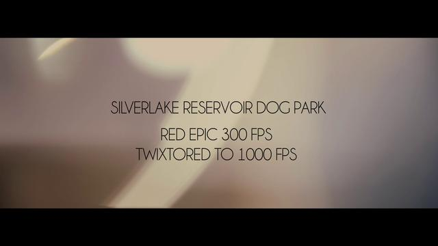 Silverlake Reservoir Dog Park