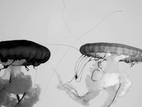 Jellies :: Film by Henry Horenstein