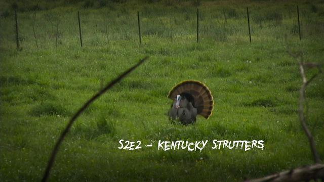 S2E2 - Kentucky Strutters