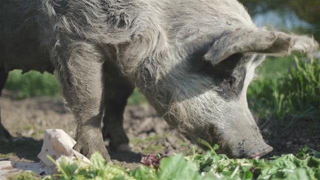 Farm Animals (GH2 | Sedna AQ1)