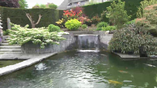 La passion du poisson un bassin de jardin d 39 exception on for Bassin poisson jardin