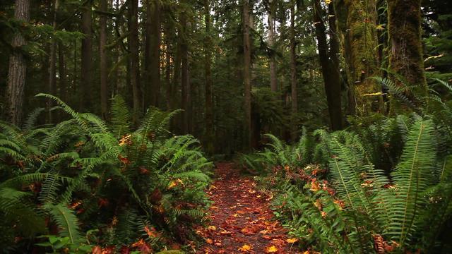 NatureBridge - 40th Anniversary on Vimeo