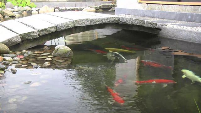 Le jardin et bassin japonais de stafsan on vimeo for Bassin de jardin japonais