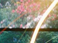 Blooming Flares - LomoKino (00:28)
