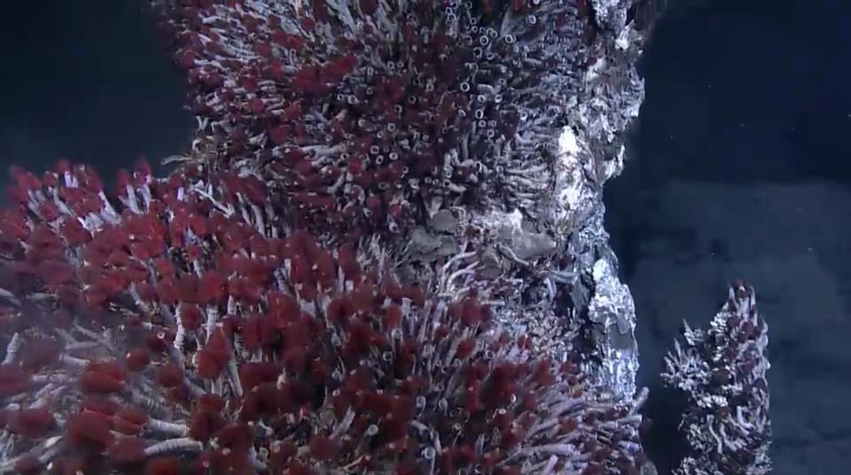 The Strange World of Hydrothermal Vents