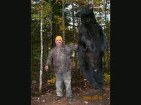 Bear Hunting Maine Bear Hunting Maine Bear Hunting Maine Bear
