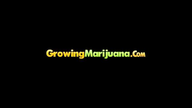 Growing Weed - XXX Medical