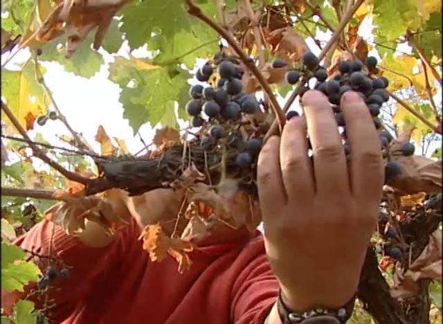 Proceso de elaboración de vino en pequeña escala con tecnología de punta.