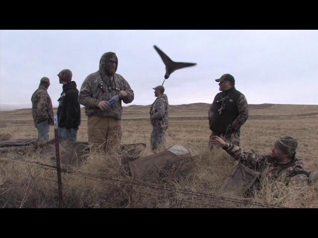Episode 4 Duck Dog Waterfowl