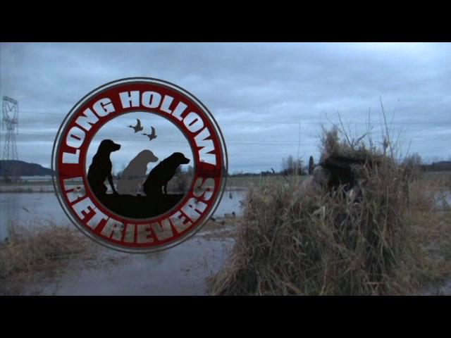 Episode 5 Duck Dog Waterfowl