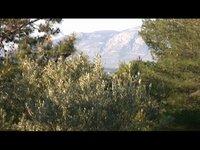 Hillside At Sparoza