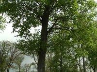 video Le bois : l'or vert de l'Auvergne
